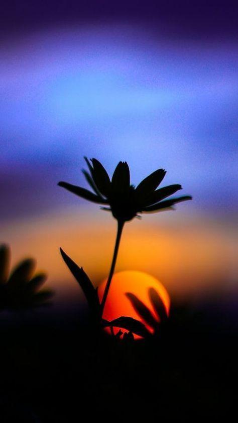 New Sunset Silhouette Art Painting Beautiful 54+ Ideas