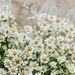 Wildflowers In Wonderland