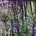 Frances Hunt Garden Design