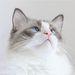 cat imprint