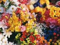 PURE PLEASURE - flowers are magnificent