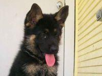 Pups I Love