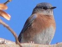 Birds and Birding  Board