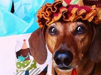 weenie dog love :)