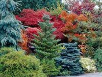 214 best Zone 5b Landscaping-Gardening images on Pinterest ...