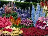 #Landscape, #Landscape designs, #Garden paths, #Rock Gardens, #Garden designs, #Shade Garden