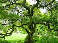 I just love trees so this includes any kind I can find!