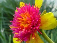 Strange and exotic flowers