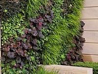 Vertical Garden/Plant Wall