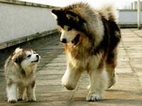 Animals are Love