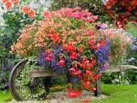 ~Flowers/Gardening~