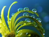 dew, rain drops, splash, bubbles