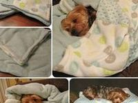 """pets who""""s mums knit and sew"""