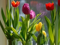 How to raise and assemble a plot of beautiful flowers, plants, fruits, and vegetables...