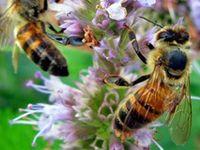 Bees N Honey