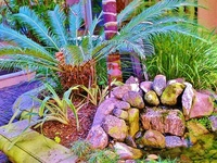 1000 images about encephalartos cycads sago on pinterest los angeles mike d 39 antoni and for Olive garden manhattan beach ca
