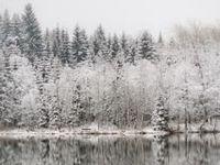 Seasonal: Winter.