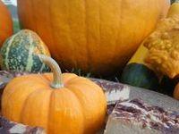 Recipes - Pumpkin
