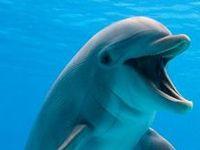 Lovable Sea Creatures
