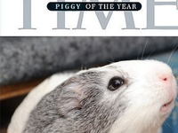 """I've had guinea pigs, aka cavies, since I was 8 years old. This board is an effort to dispel the myth among some that these are """"dumb animals,"""" as well as provide a source of information and humor for all fellow piggy lovers."""