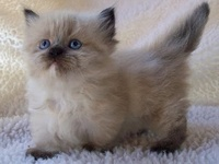 For the kitten I want to get