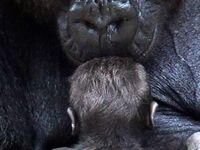 Oh how I love animals!!!❤