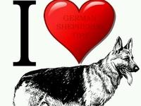 ♥ German Shepherds ♥