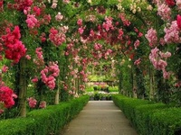 God Almighty first planted a garden. And indeed, it is the purest of human pleasures.