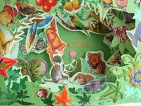 Landforms Jungles  Rainforest