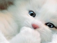 Cute Cat's  And Kitten's