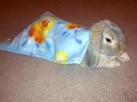 For Our Teddy Bunny
