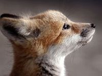 foxing it out