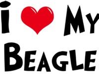 "my 2 beagles are my ""kids""!!!"