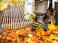 Fall Gardens and Porches