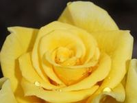 Yellow - My Favorite Color
