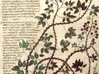 Botanical prints & Drawings