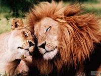 Animals Love Too