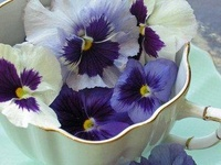 One of my favorites...i have a guest room all decorated in a pansy theme!