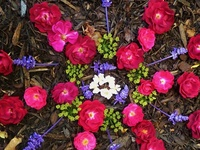 Natural Medicine: Herbalism & Home Remedies