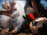memorial day rodeo utah