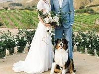4-legged Wedding Guests  Board