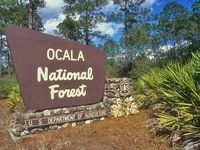 1000 Images About Ocala On Pinterest