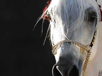♥ ❤ Horses...my obsession  ❤ ♥