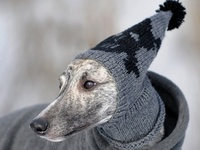 knit the dog on Pinterest Dog Sweaters, Greyhounds and ...