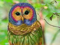 Owls,Owls,Owls