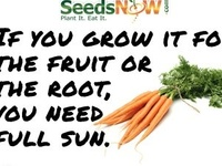 Grow your own!  Grow it, can it, store it, eat it!!
