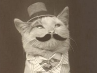 Yep ... I'm a cat lady.