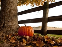 ~ Autumn is my favorite time of year...there's nothing like pumpkins, mums, and scarecrows adorned with all of the beautiful colors, and gathering for Thanksgiving with all of my loved ones ~
