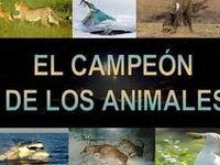 Animales / Animales vertebrados e invertebrados