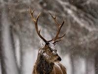 Beautiful Wilderness - Stan's Love